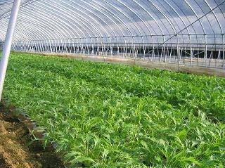 Mesin Canggih Pemanen Buah dan Sayur